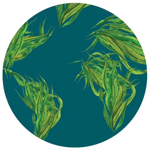 with-new-line-atlantic-sea-farms-tries-to-kelp-the-earth
