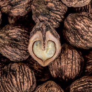 hammons-black-walnuts-feature-wild-harvest-story-brand-refresh